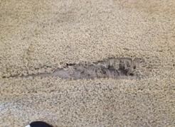 Repair Curling